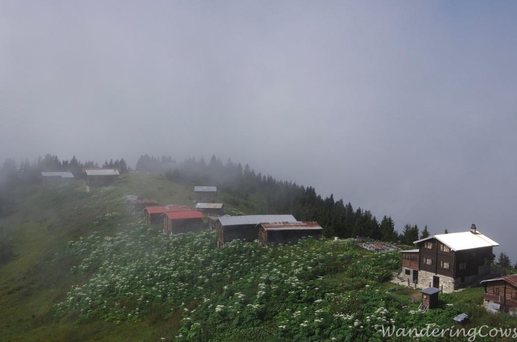 Pokut in the mist