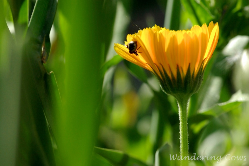 Yellow flower and insect