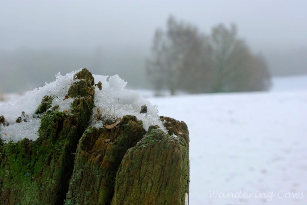 Snow on tree stump
