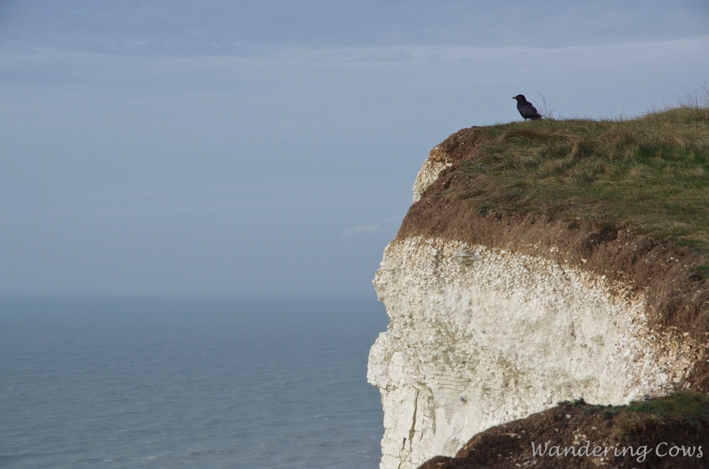 Bird on cliff edge